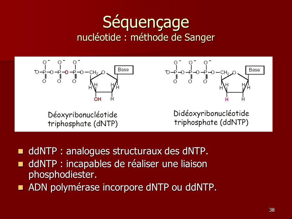 38 Séquençage nucléotide : méthode de Sanger ddNTP : analogues structuraux des dNTP.