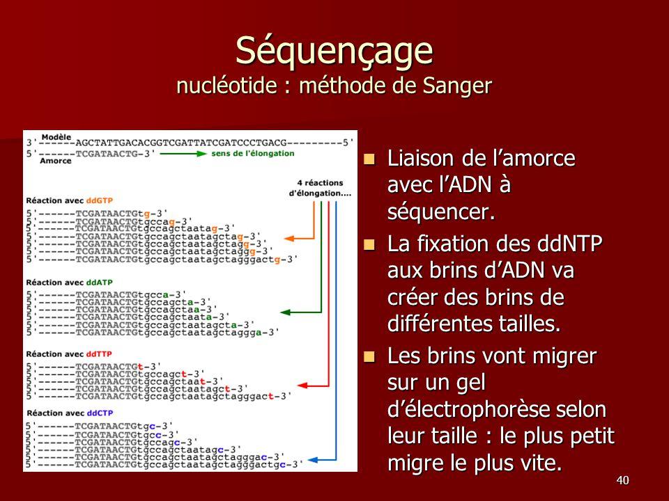 40 Séquençage nucléotide : méthode de Sanger Liaison de l'amorce avec l'ADN à séquencer. Liaison de l'amorce avec l'ADN à séquencer. La fixation des d