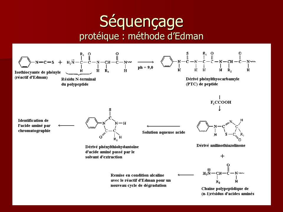 47 Séquençage protéique : méthode d'Edman