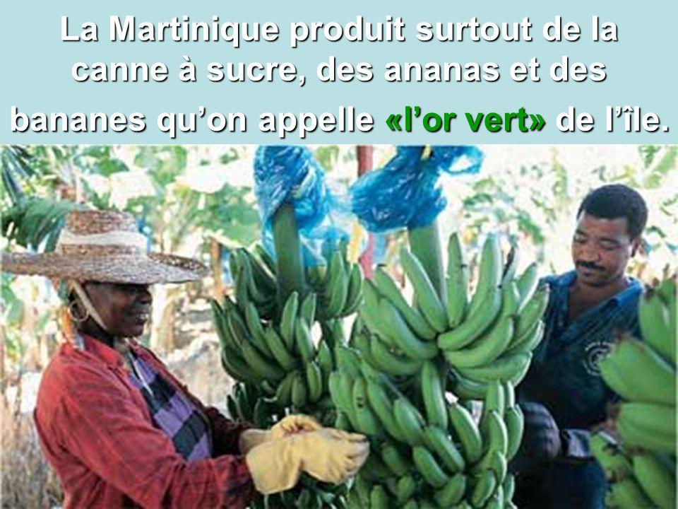 4 La Martinique produit surtout de la canne à sucre, des ananas et des bananes qu'on appelle «l'or vert» de l'île.