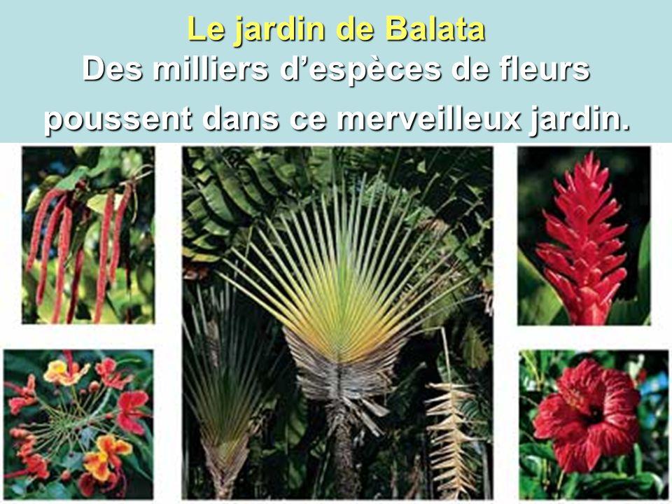 5 Le jardin de Balata Des milliers d'espèces de fleurs poussent dans ce merveilleux jardin.