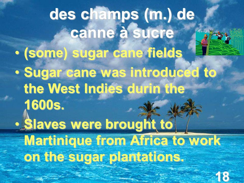 18 des champs (m.) de canne à sucre (some) sugar cane fields(some) sugar cane fields Sugar cane was introduced to the West Indies durin the 1600s.Sugar cane was introduced to the West Indies durin the 1600s.