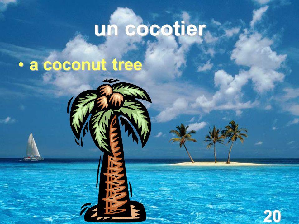 20 un cocotier a coconut treea coconut tree