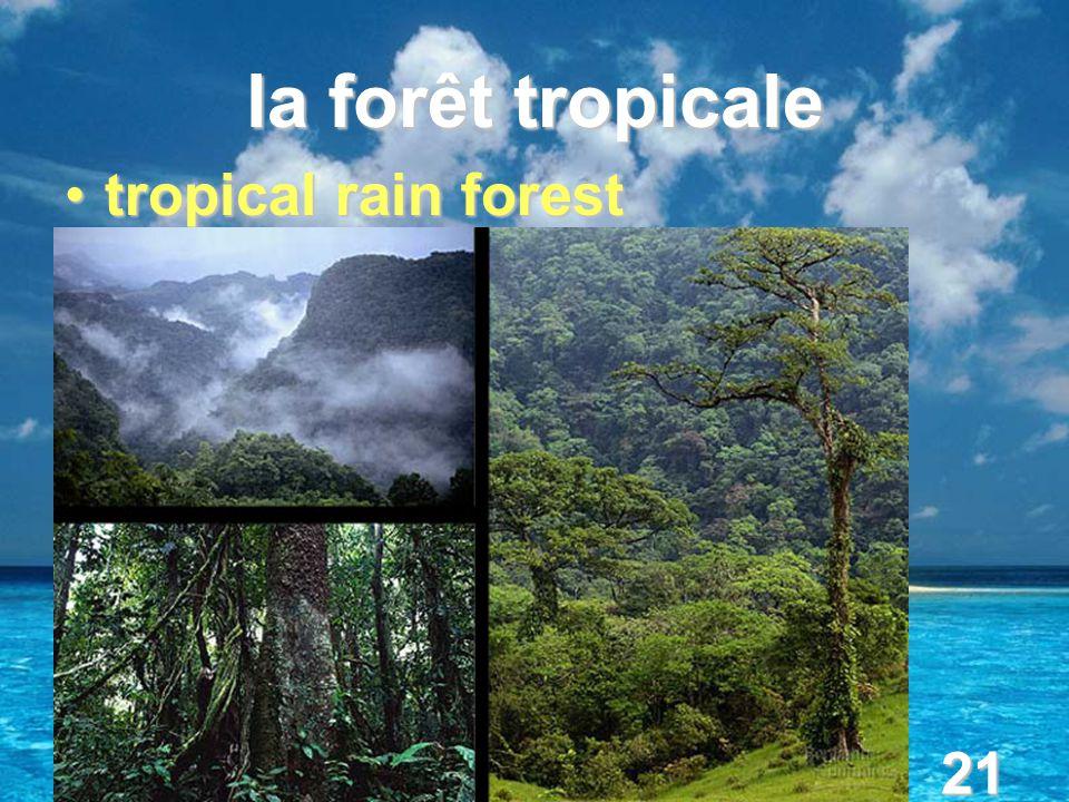 21 la forêt tropicale tropical rain foresttropical rain forest