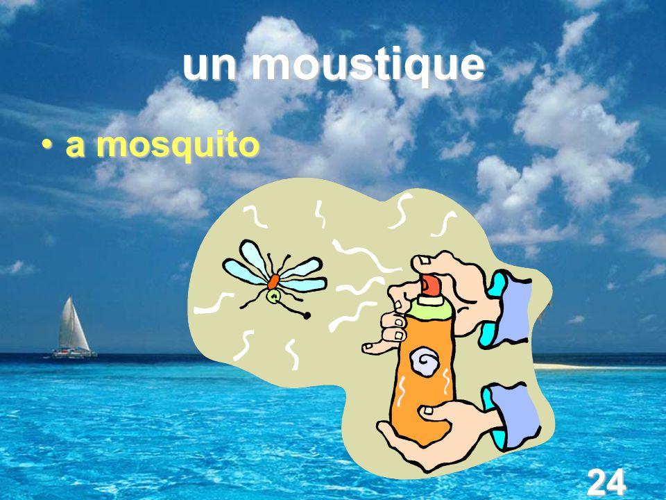 24 un moustique a mosquitoa mosquito