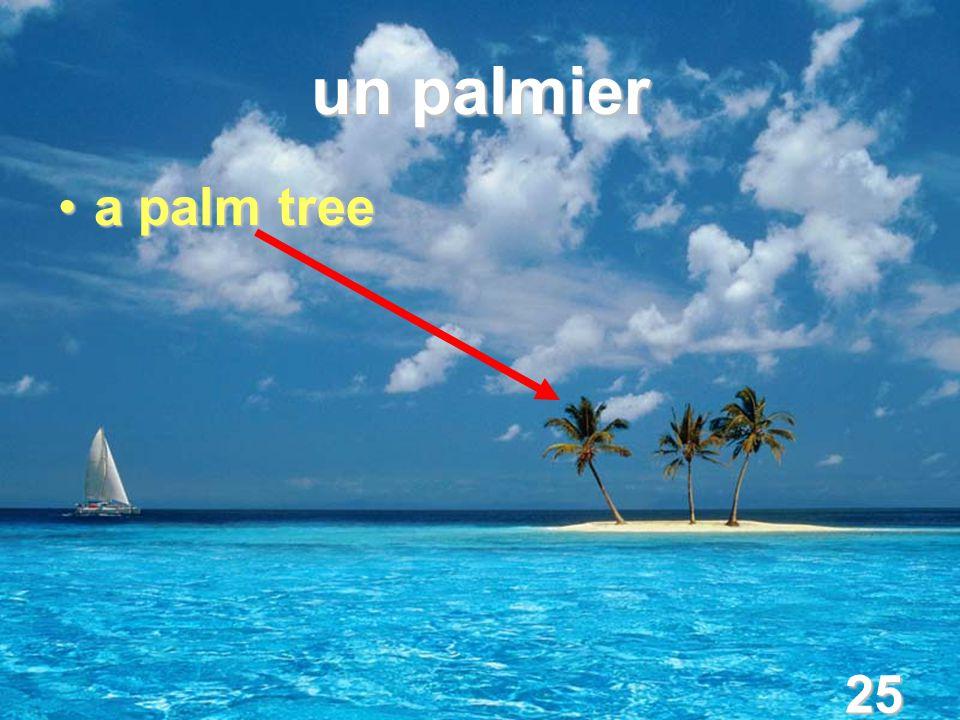 25 un palmier a palm treea palm tree