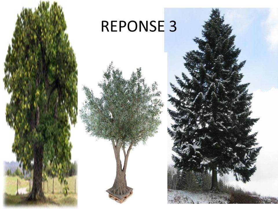 REPONSE 3