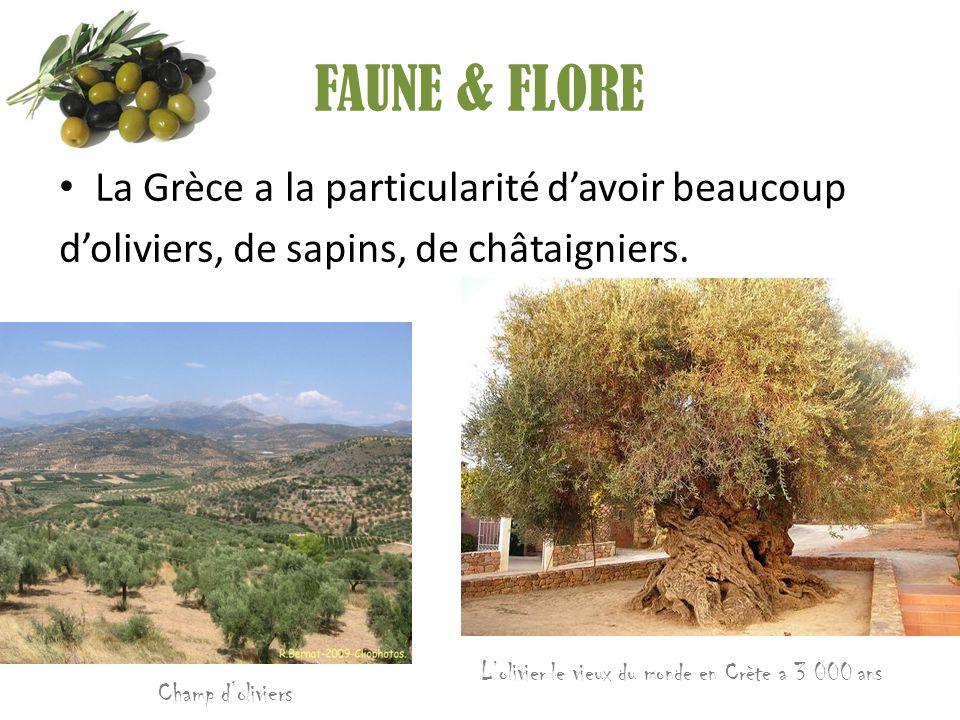 FAUNE & FLORE La Grèce a la particularité d'avoir beaucoup d'oliviers, de sapins, de châtaigniers. L'olivier le vieux du monde en Crète a 3 000 ans Ch