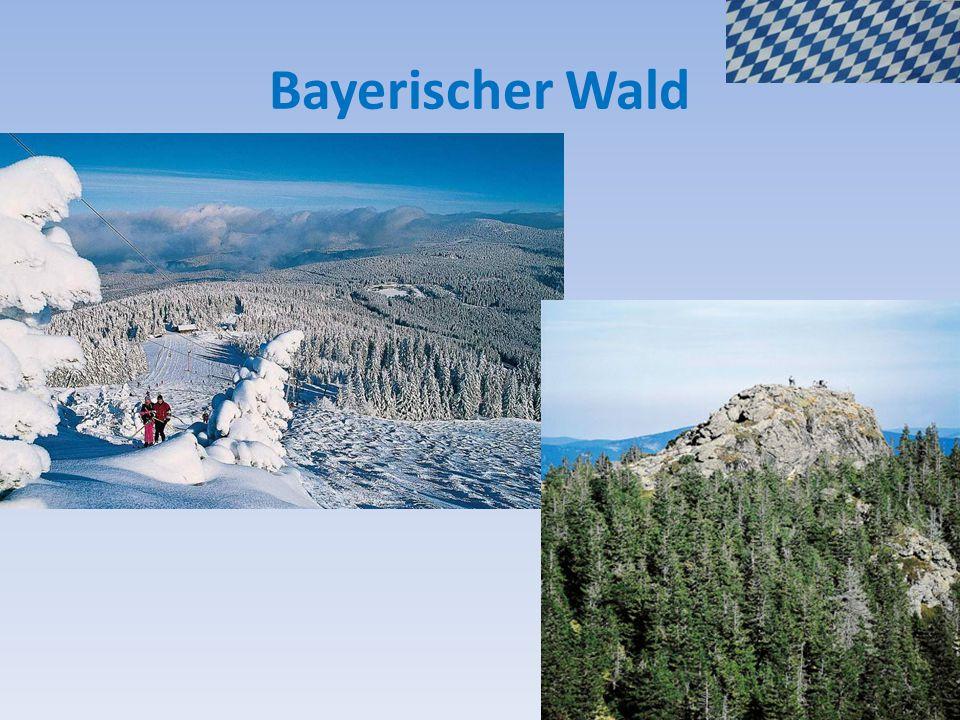 Bayerischer Wald 22