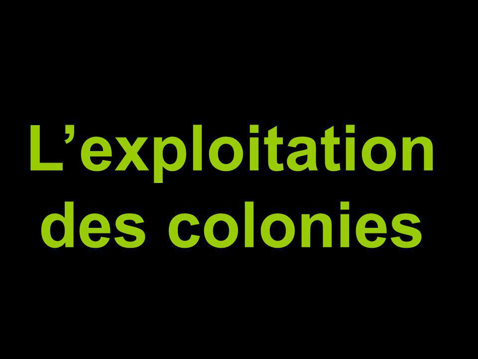 L'exploitation des colonies