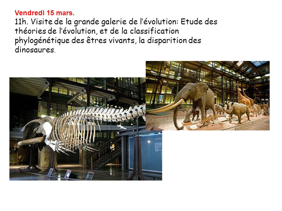 Vendredi 15 mars. 11h. Visite de la grande galerie de l'évolution: Etude des théories de l'évolution, et de la classification phylogénétique des êtres