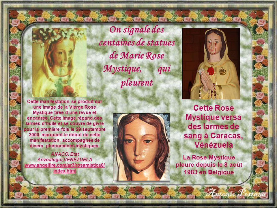 On signale des centaines de statues de Marie Rose Mystique, qui pleurent Cette Rose Mystique versa des larmes de sang à Caracas, Vénézuela La Rose Mystique pleure depuis le 8 août 1983 en Belgique Cette manifestation se produit sur une image de la Vierge Rose Mystique tirée d'une revue et encadrée.