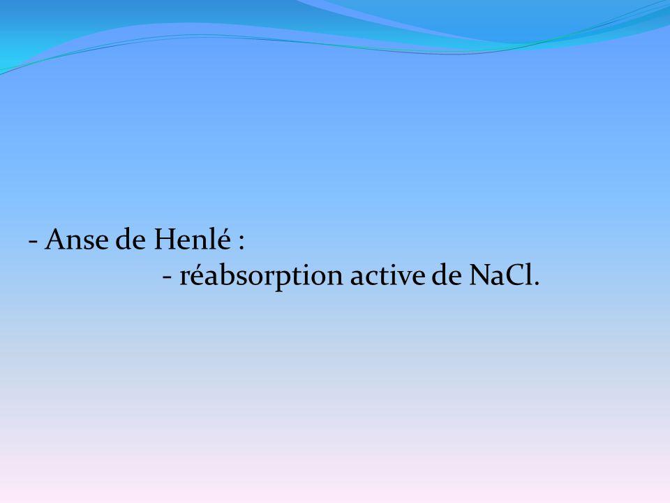 - Anse de Henlé : - réabsorption active de NaCl.