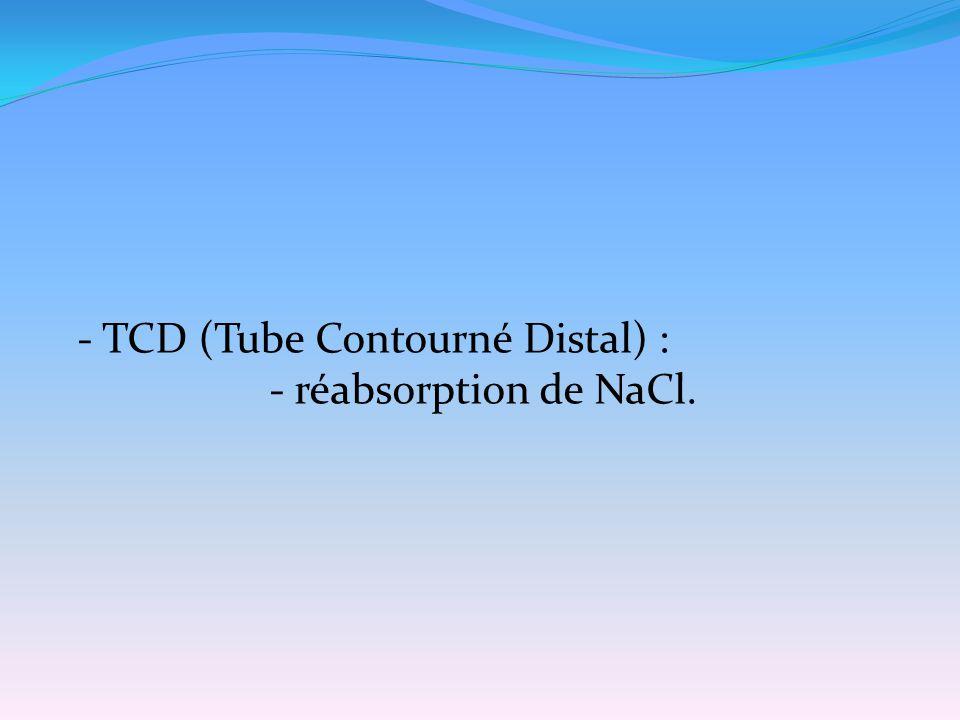 - TCD (Tube Contourné Distal) : - réabsorption de NaCl.