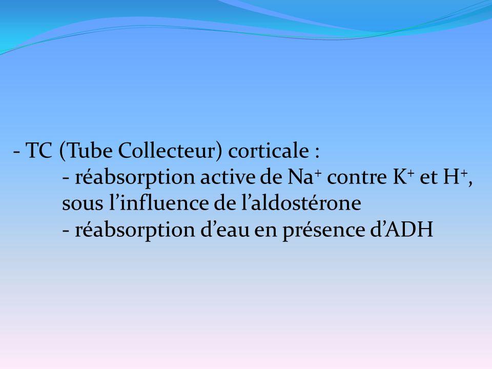 - TC (Tube Collecteur) corticale : - réabsorption active de Na + contre K + et H +, sous l'influence de l'aldostérone - réabsorption d'eau en présence