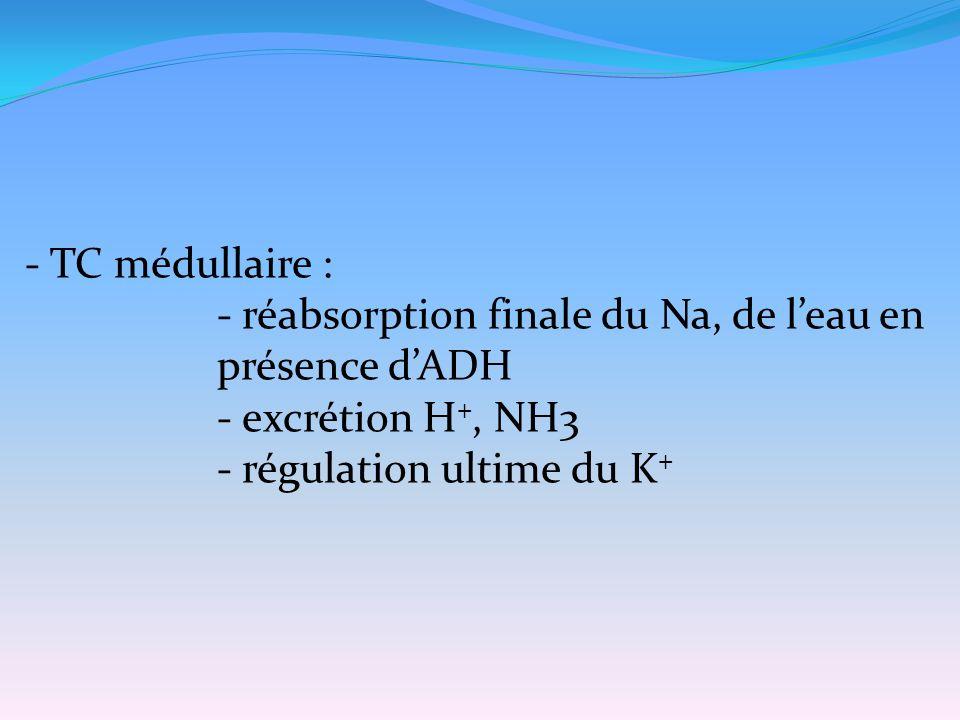 - TC médullaire : - réabsorption finale du Na, de l'eau en présence d'ADH - excrétion H +, NH3 - régulation ultime du K +