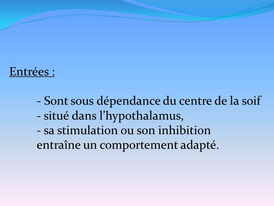 Entrées : - Sont sous dépendance du centre de la soif - situé dans l'hypothalamus, - sa stimulation ou son inhibition entraîne un comportement adapté.