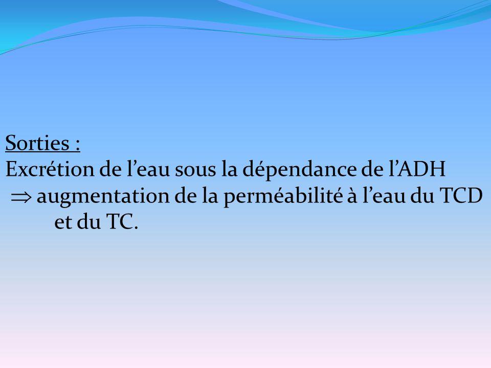 Sorties : Excrétion de l'eau sous la dépendance de l'ADH  augmentation de la perméabilité à l'eau du TCD et du TC.