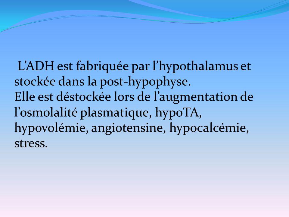 L'ADH est fabriquée par l'hypothalamus et stockée dans la post-hypophyse. Elle est déstockée lors de l'augmentation de l'osmolalité plasmatique, hypoT