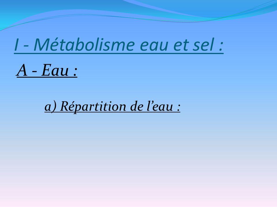 B - Bilan : Entrées : alimentaire, 50 à 100 mmol/jour Sorties : - élimination rénale essentiellement - perte par selles, sueur