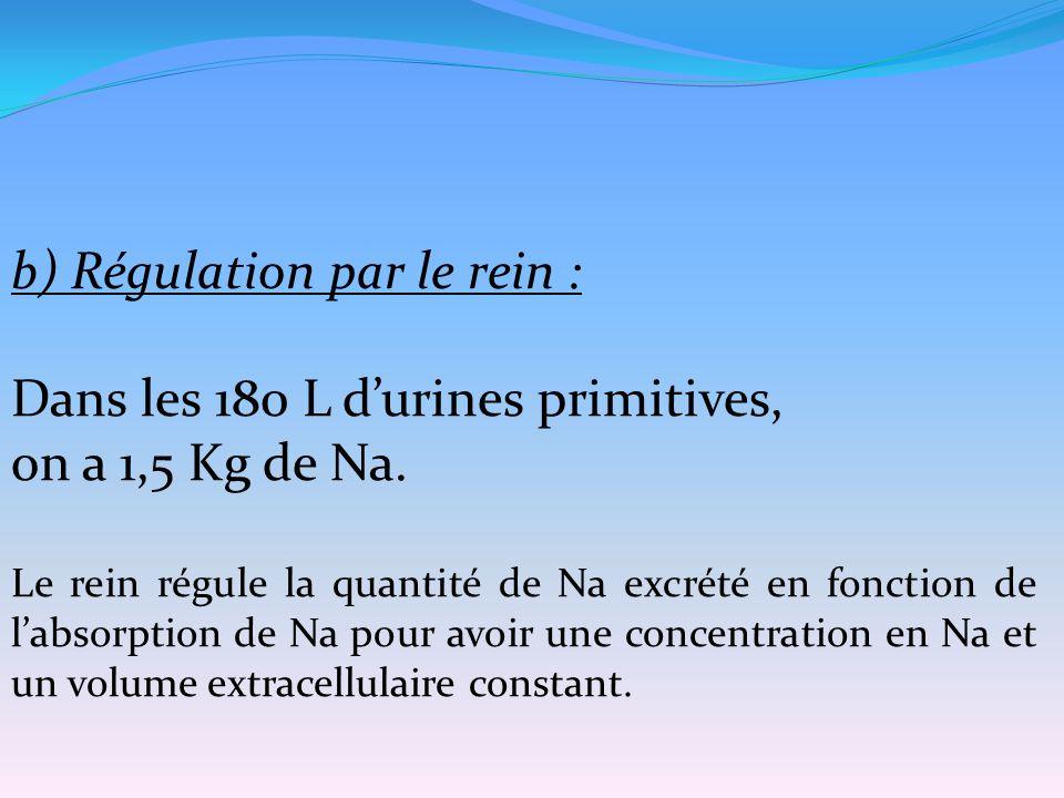 b) Régulation par le rein : Dans les 180 L d'urines primitives, on a 1,5 Kg de Na. Le rein régule la quantité de Na excrété en fonction de l'absorptio