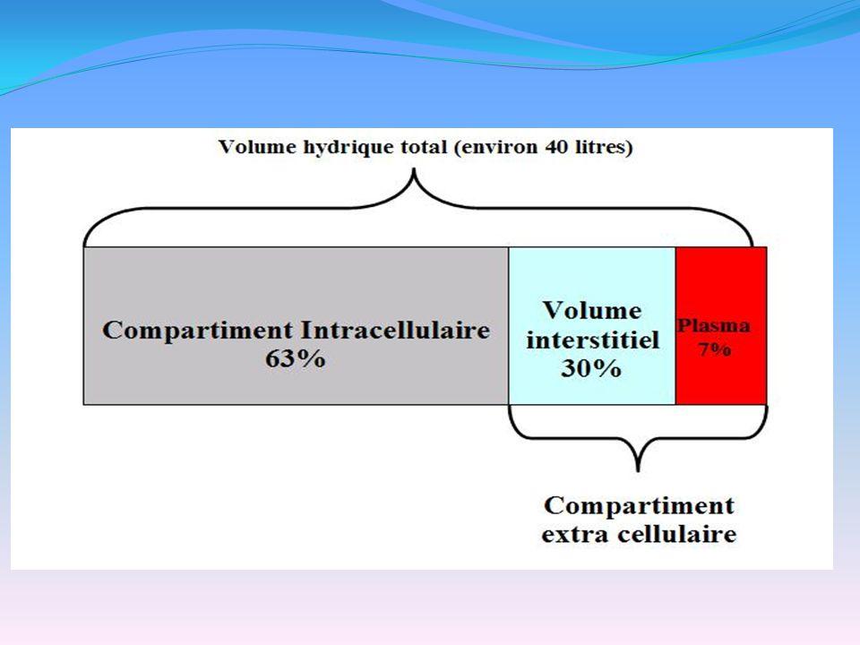 Métabolisme du K : -équilibre acido-basique : alcalose favorise pénétration du potassium dans les cellules et baisse la kaliémie.