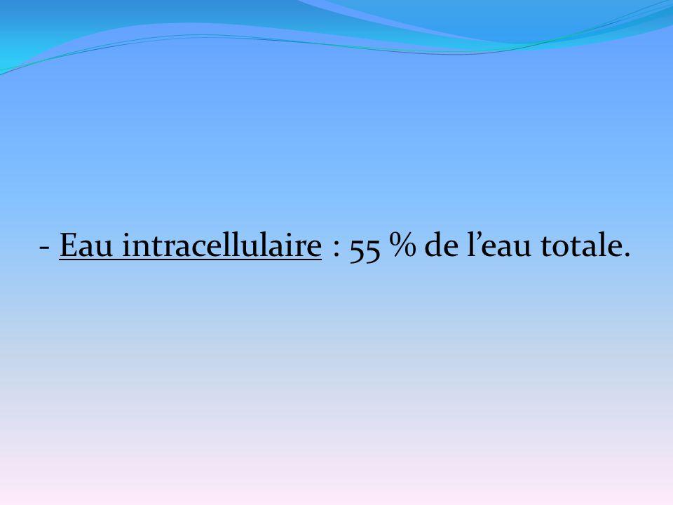 - Eau intracellulaire : 55 % de l'eau totale.