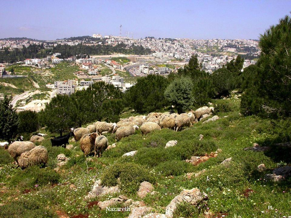 PL Nazareth