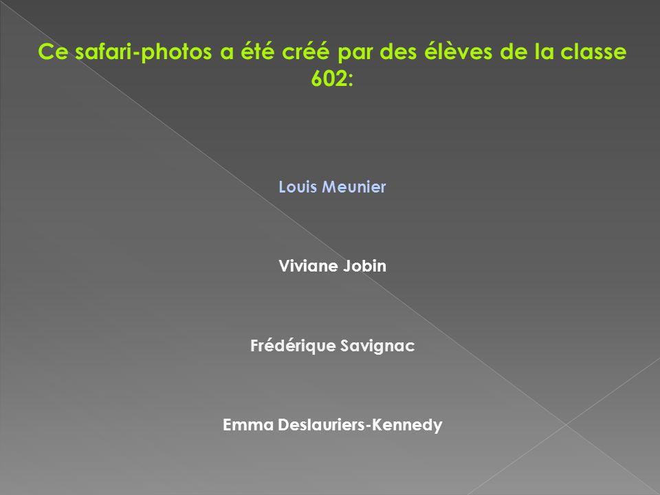 Ce safari-photos a été créé par des élèves de la classe 602: Louis Meunier Viviane Jobin Frédérique Savignac Emma Deslauriers-Kennedy