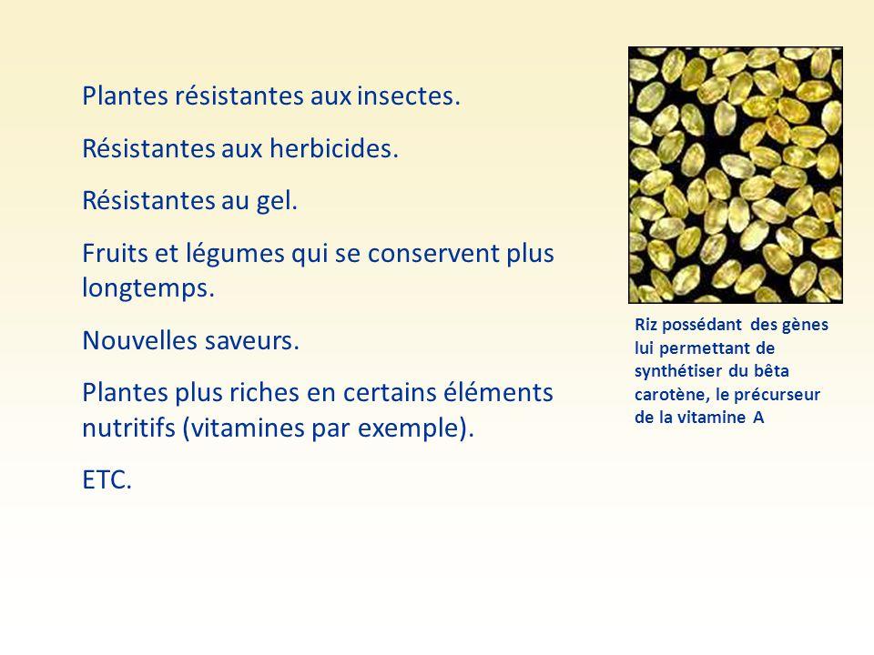 Plantes résistantes aux insectes. Résistantes aux herbicides. Résistantes au gel. Fruits et légumes qui se conservent plus longtemps. Nouvelles saveur