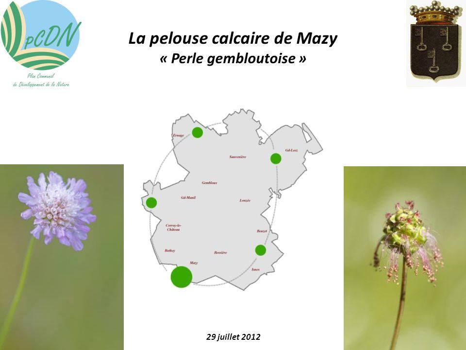 La pelouse calcaire de Mazy « Perle gembloutoise » 29 juillet 2012