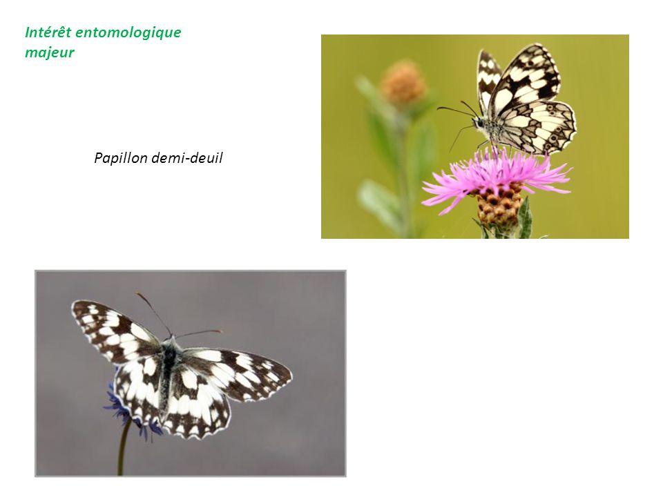 Intérêt entomologique majeur Papillon demi-deuil