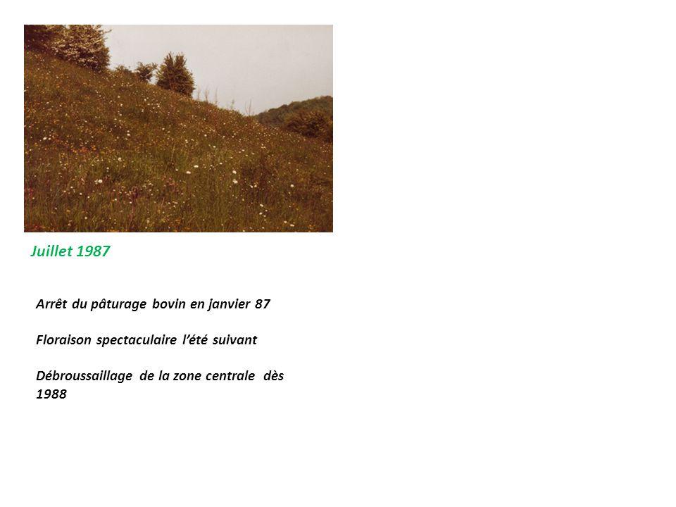 Juillet 1987 Arrêt du pâturage bovin en janvier 87 Floraison spectaculaire l'été suivant Débroussaillage de la zone centrale dès 1988
