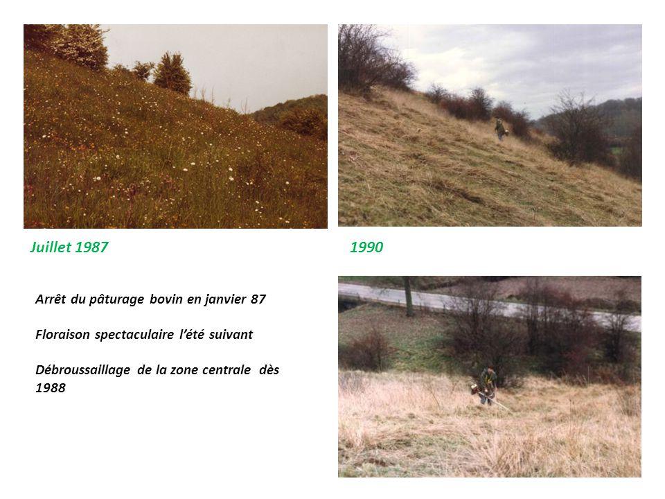 Juillet 19871990 Arrêt du pâturage bovin en janvier 87 Floraison spectaculaire l'été suivant Débroussaillage de la zone centrale dès 1988