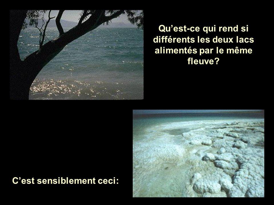 La mer Morte est une lagune salpêtreuse et dense, où il n'y a pas de vie et où reste stagnante l'eau qui vient du fleuve. La mer Morte est une lagune
