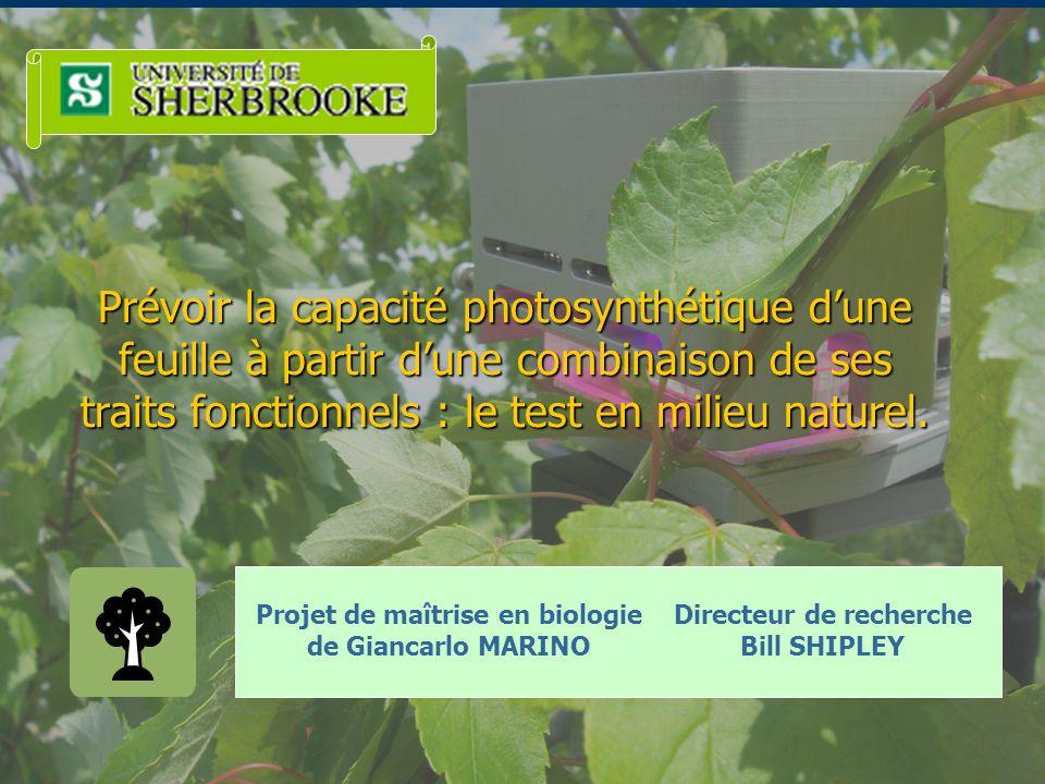 Prévoir la capacité photosynthétique d'une feuille à partir d'une combinaison de ses traits fonctionnels : le test en milieu naturel.
