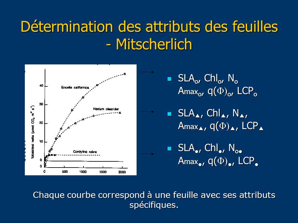 Détermination des attributs des feuilles - Mitscherlich SLA o, Chl o, N o SLA o, Chl o, N o A max o, q( Φ) o, LCP o SLA , Chl , N , SLA , Chl , N , A max , q( Φ) , LCP  SLA ●, Chl ●, N o● SLA ●, Chl ●, N o● A max ●, q( Φ) ●, LCP ● Chaque courbe correspond à une feuille avec ses attributs spécifiques.