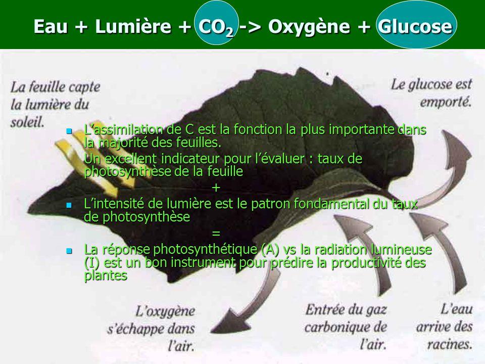 Eau + Lumière + CO 2 -> Oxygène + Glucose L'assimilation de C est la fonction la plus importante dans la majorité des feuilles.