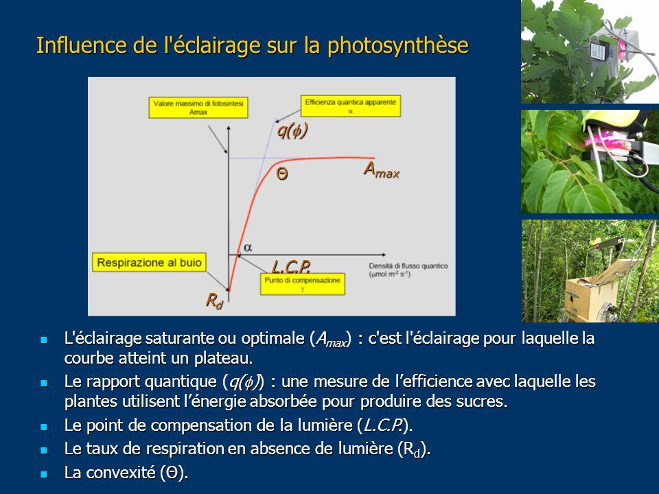 Influence de l éclairage sur la photosynthèse L éclairage saturante ou optimale A max : c est l éclairage pour laquelle la courbe atteint un plateau.