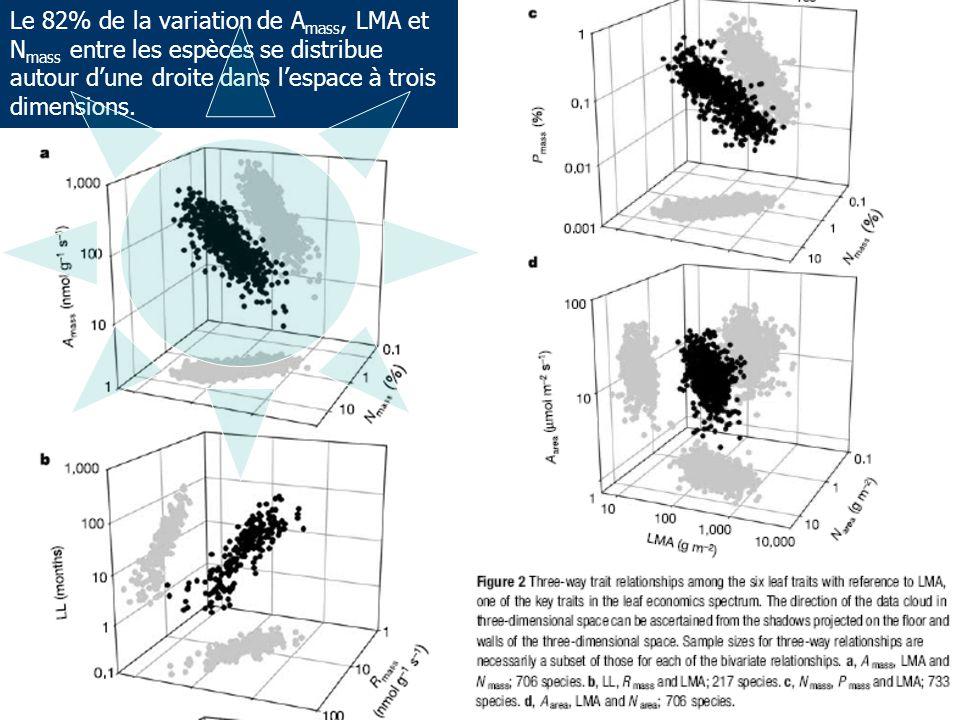 Le 82% de la variation de A mass, LMA et N mass entre les espèces se distribue autour d'une droite dans l'espace à trois dimensions.
