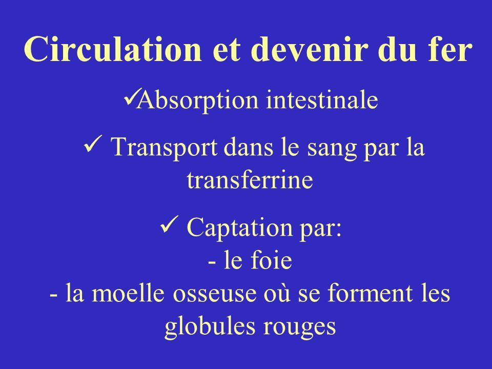 Absorption intestinale Transport dans le sang par la transferrine Captation par: - le foie - la moelle osseuse où se forment les globules rouges Circulation et devenir du fer