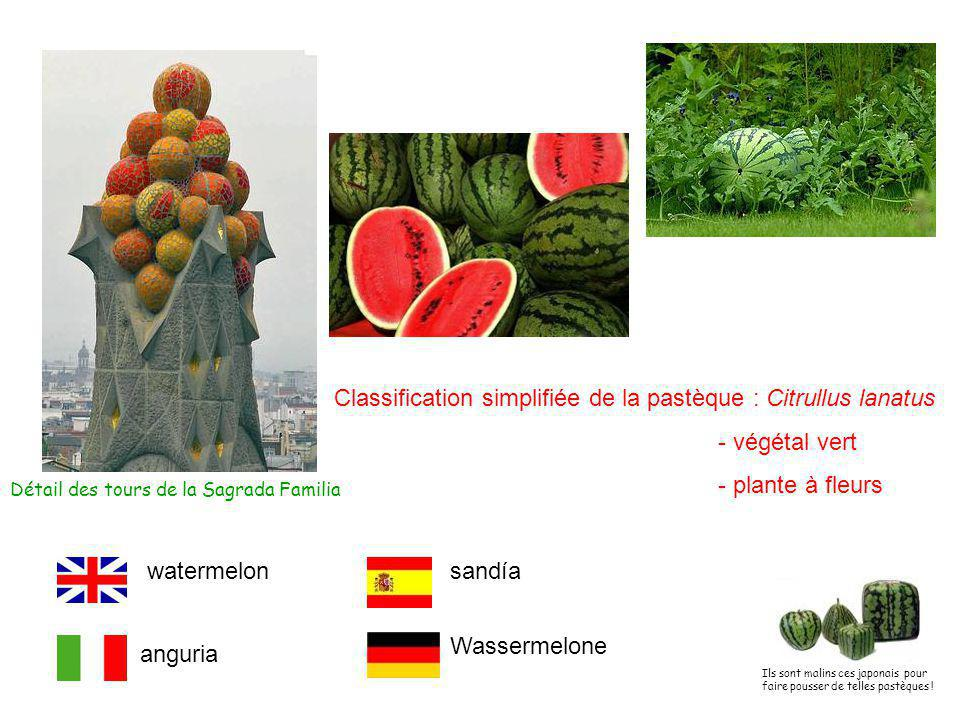 Classification simplifiée de la pastèque : Citrullus lanatus - végétal vert - plante à fleurs Détail des tours de la Sagrada Familia anguria watermelonsandía Wassermelone Ils sont malins ces japonais pour faire pousser de telles pastèques !