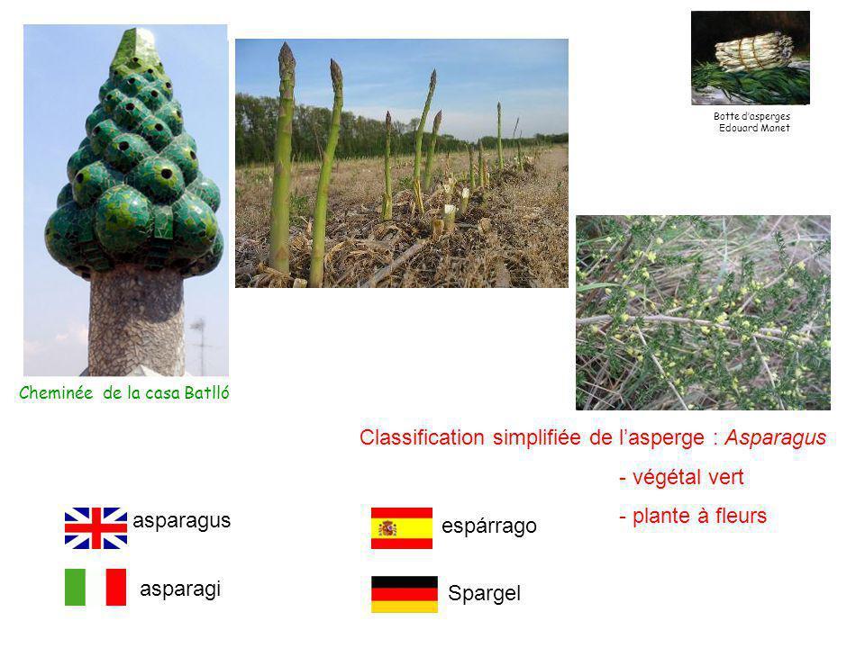 Classification simplifiée de l'asperge : Asparagus - végétal vert - plante à fleurs Cheminée de la casa Batlló asparagus asparagi espárrago Spargel Botte d'asperges Edouard Manet