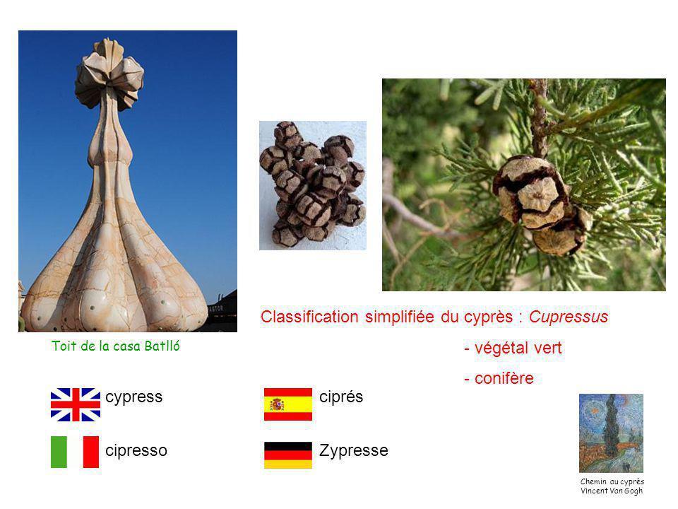 Classification simplifiée du cyprès : Cupressus - végétal vert - conifère Toit de la casa Batlló cypress cipresso ciprés Zypresse Chemin au cyprès Vincent Van Gogh