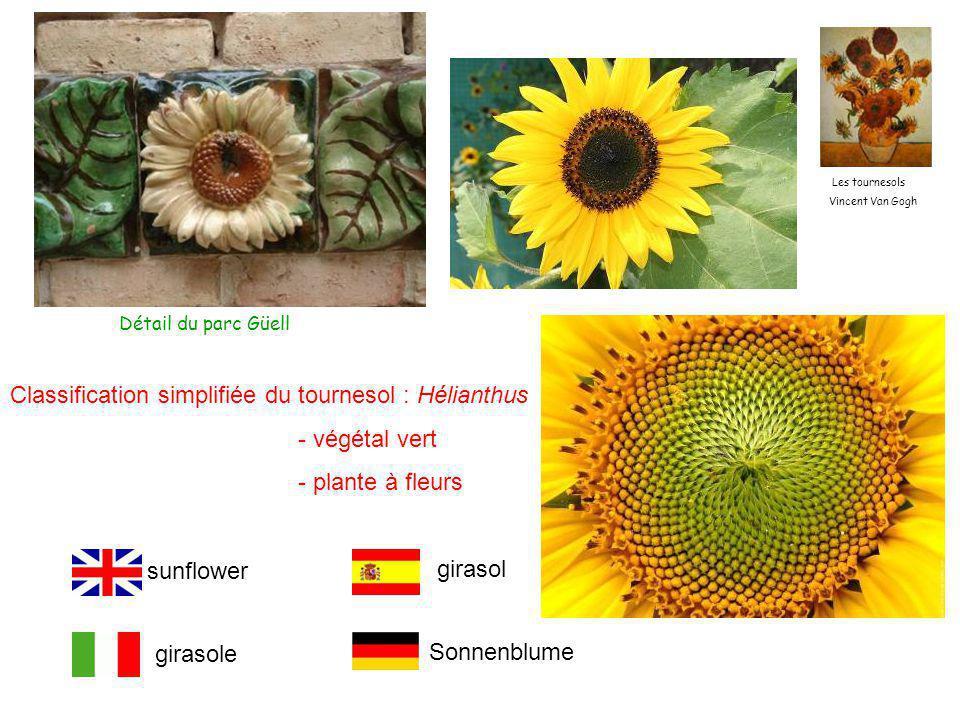 Les tournesols Vincent Van Gogh Classification simplifiée du tournesol : Hélianthus - végétal vert - plante à fleurs Détail du parc Güell sunflower girasole girasol Sonnenblume