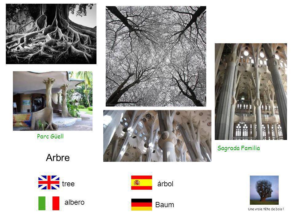 Parc Güell Sagrada Familia Arbre tree albero árbol Baum Une vraie tête de bois !
