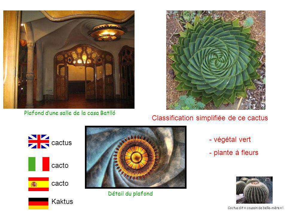 Plafond d'une salle de la casa Batlló Classification simplifiée de ce cactus - végétal vert - plante à fleurs cacto Kaktus Détail du plafond cactus Cactus dit « coussin de belle-mère » !