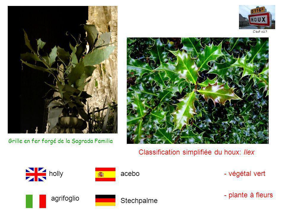 Grille en fer forgé de la Sagrada Familia Classification simplifiée du houx: Ilex - végétal vert - plante à fleurs Stechpalme holly agrifoglio acebo C'est où ?