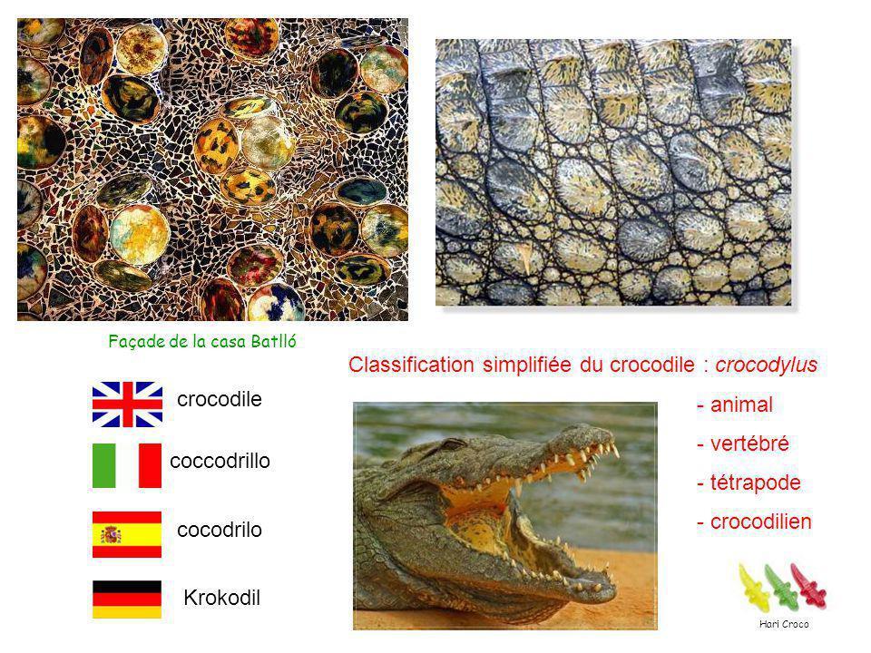 Façade de la casa Batlló Classification simplifiée du crocodile : crocodylus - animal - vertébré - tétrapode - crocodilien crocodile coccodrillo cocodrilo Krokodil Hari Croco