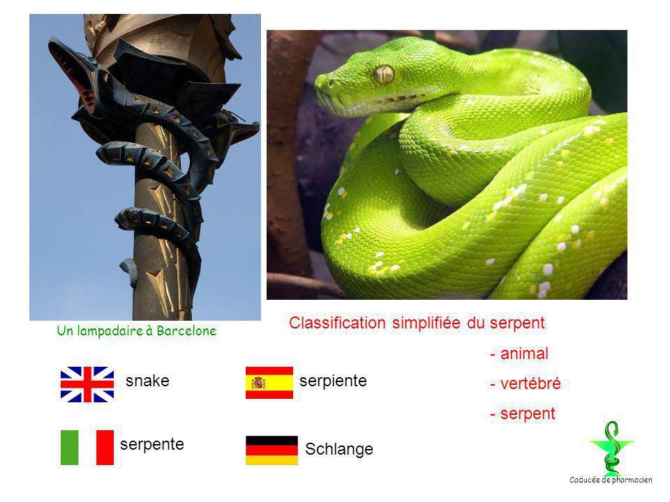 Classification simplifiée du serpent - animal - vertébré - serpent snake serpente serpiente Schlange Un lampadaire à Barcelone Caducée de pharmacien